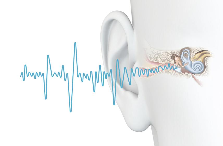 Funktion des Hörens